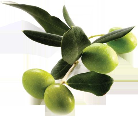 Olivno olje Istrska belica